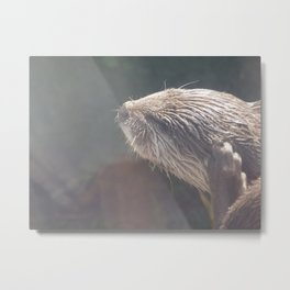 Milestone Photos Animals Metal Print