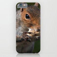 Squirrel's Lunch  iPhone 6s Slim Case