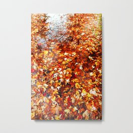 Maple Leaves floating on the Lake. Autumn, Fall Metal Print