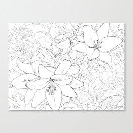 Asiatic Lillies I line art Canvas Print