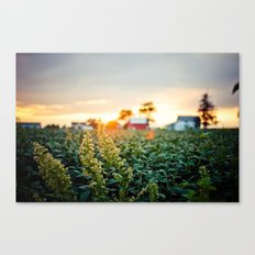 Rustic Midwest Farm  Canvas Print