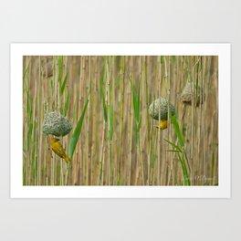 Golden Weavers Art Print