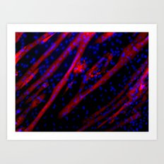 Microscopic Muscle Cells Art Print