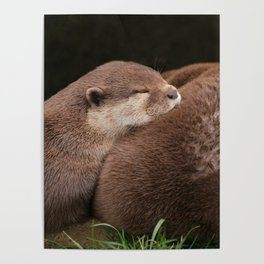 Otterly Magic Poster