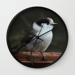 Gray Jay Wall Clock