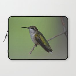Ruby Throated Humming Bird At Rest Laptop Sleeve