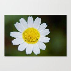 Miss Daisy Canvas Print