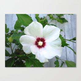 White Hibiscus Flower Ruffle Canvas Print