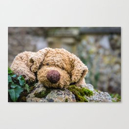 The lonely teddy Canvas Print