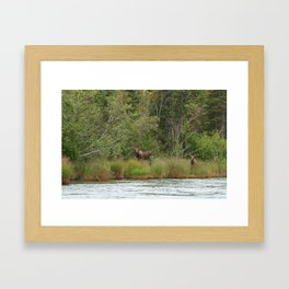 Alaskan Moose Framed Art Print