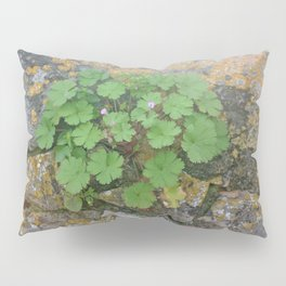 Life on a stone wall Pillow Sham