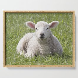 Spring little lamb Serving Tray