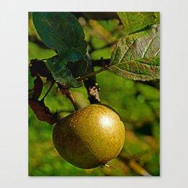hanging apple Canvas Print