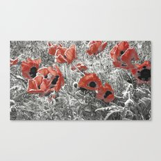Poppy - blowing in the wind #02 Canvas Print