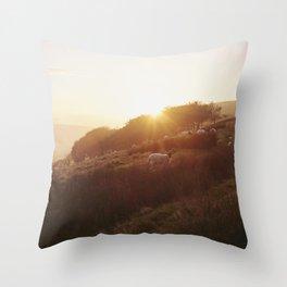 Sheep grazing on hillside at sunset. Derbyshire, UK. Throw Pillow