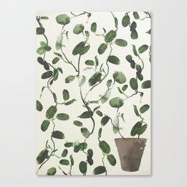 Hoya Carnosa / Porcelainflower Canvas Print
