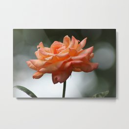 A Rose by Exactly That Name Metal Print