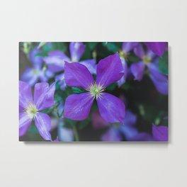 Purple in the Garden Metal Print