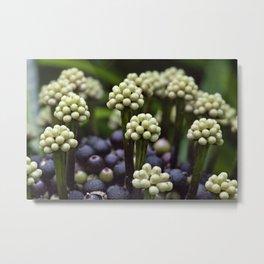 Green Aralia Flowers Metal Print