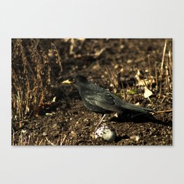 Black and brown Canvas Print