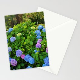 Hydrangea Blossoms Stationery Cards