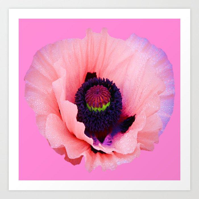 Purple Poppy Flower Vignette Art Print By Sharlesart Society6