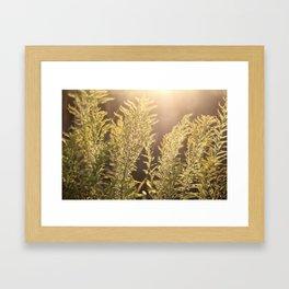 Flame II  Framed Art Print