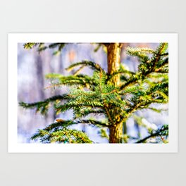 Christmas Tree Raises In The Forest Art Print