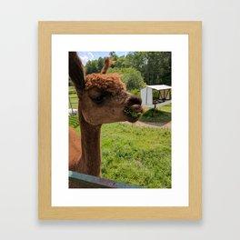 Artemis Alpaca Framed Art Print