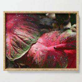 Tropical Rain - Botanical Art by Sharon Cummings Serving Tray
