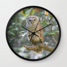 Barred Owl Dreams Wall Clock
