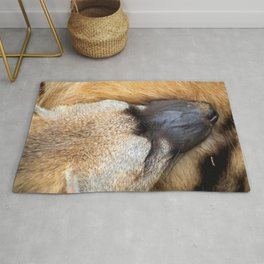Sleeping Aardwolf Rug