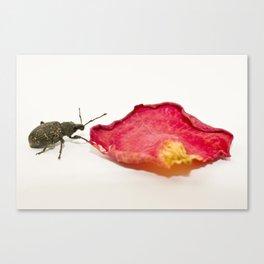 Weevil 1 Canvas Print