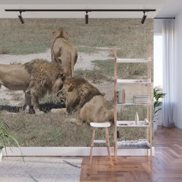Male Lions Wall Mural