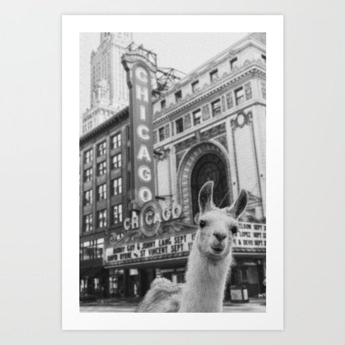 Chicago Llama Kunstdrucke