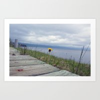 Canadian dandelion Art Print