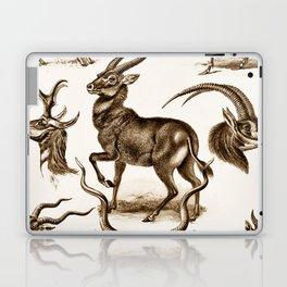 Ernst Haeckel Antilopina Antelope Laptop & iPad Skin