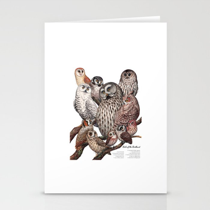Owls of the Northeast Stationery Cards