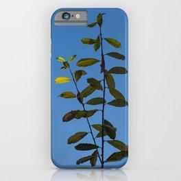 Leaf Catching Sunlight iPhone Case