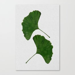 Ginkgo Leaf II Canvas Print