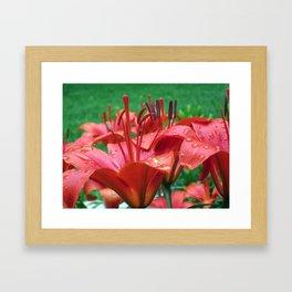Adieu Red Star Lilies Framed Art Print