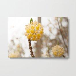 Yellow Flower Ball Metal Print
