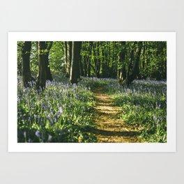 Path through wild Bluebells in ancient woodland. Wayland Wood, Norfolk, UK. Art Print