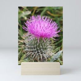 Scottish Thistle Mini Art Print