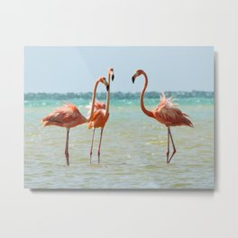 Flamingos Isla Holbox, Mexico Metal Print