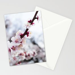PLUM BLOSSOMS Edition01 Stationery Cards
