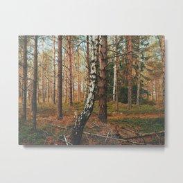Lone Birch Metal Print