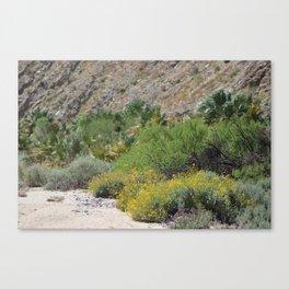 Desert Scene 3 Coachella Valley Wildlife Preserve Canvas Print