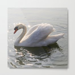 one swan a swimming Metal Print