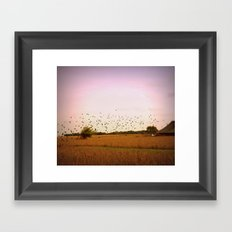 Birds flying at sunset Framed Art Print